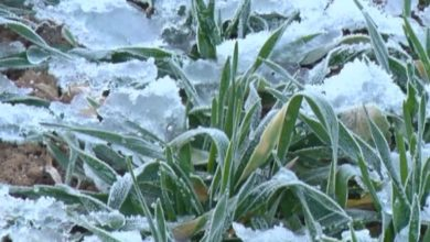 Photo of Сложившиеся агрометеорологические условия пока не сказались на озимых зерновых в хозяйствах