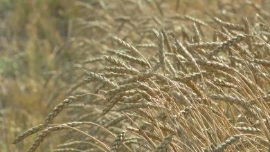 Photo of В Лидском районе продолжается уборка зерновых