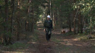 Photo of В Бердовском лесничестве случайных людей нет