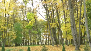 19-го октября в Беларуси пройдет добровольная акция «Чистый лес»