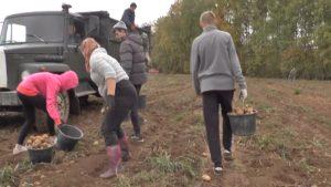 В Лидском районе урожай картофеля выше прошлогоднего