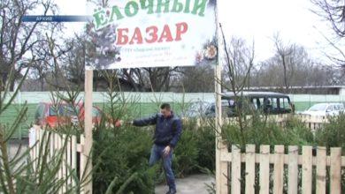 Елочные базары в этом году в нашем регионе начнут работать 18-го декабря