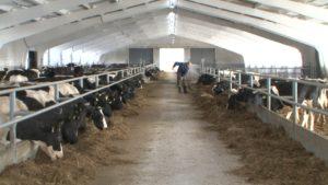 В Беларуси продолжается акция «Наш животновод»