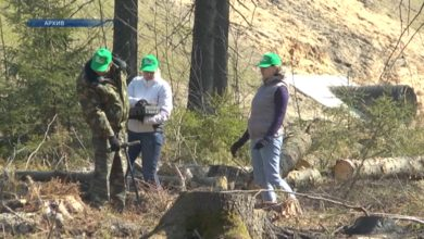 Лидчане примут участие в республиканской добровольной акции «Неделя леса»