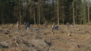 """Лидчане поддержали республиканскую добровольную акцию """"Неделя леса"""""""