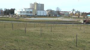 Погода в ближайшие дни в Беларуси будет по-настоящему весенней