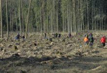 Photo of Лесхозы Беларуси подводят итоги республиканской акции «Неделя леса»