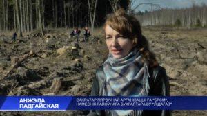 Лесхозы Беларуси подводят итоги республиканской акции «Неделя леса»