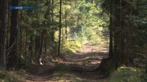 В Лидском районе введен запрет на посещение лесов