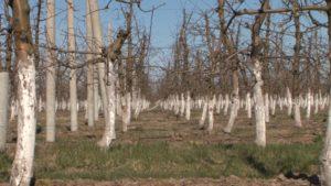 В Тарновском саду в любую пору года ухаживают за деревьями и кустарниками