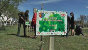 В рамках акции «Миру-сад!» в агрогородке Ёдки заложен яблоневый сад