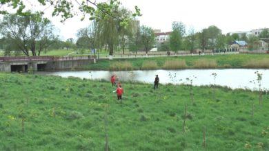 Лидские БРСМовцы поддержали добровольные акции