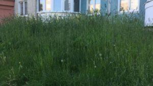 """Лидчан волнует вопрос """"Почему в городе не костя траву?"""""""