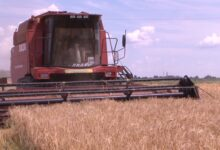 Photo of Почти 40 центнеров зерновых с гектара в Лидском районе