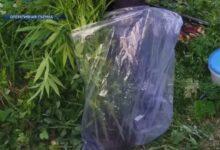 Photo of Задержан 33-летний житель Лиды, который подозревается в выращивании конопли