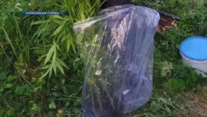 Задержан 33-летний житель Лиды, который подозревается в выращивании конопли