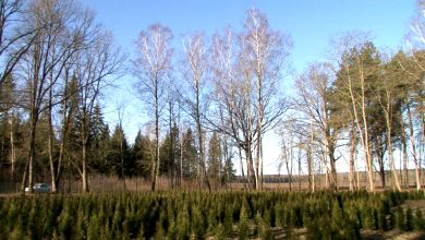 Photo of В Лидском районе снят запрет на посещение лесов