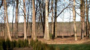 В Лидском районе снят запрет на посещение лесов