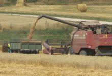 Белорусские хлеборобы собрали более шести миллионов тонн зерна