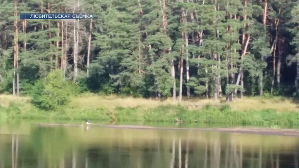 В Лидском районе замечен черный аист, занесенный в Красную Книгу