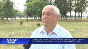 Беларуси угрожает стремительное распространение канадского золотарника