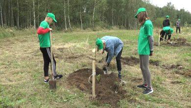 Пиар-акция инициативы по посадке деревьев прошла в Лиде