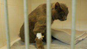 Уникальную операцию по протезированию конечности у животного провели в Лиде