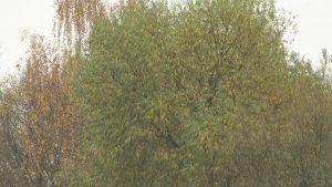 Природа в этом году благосклонна к белорусам