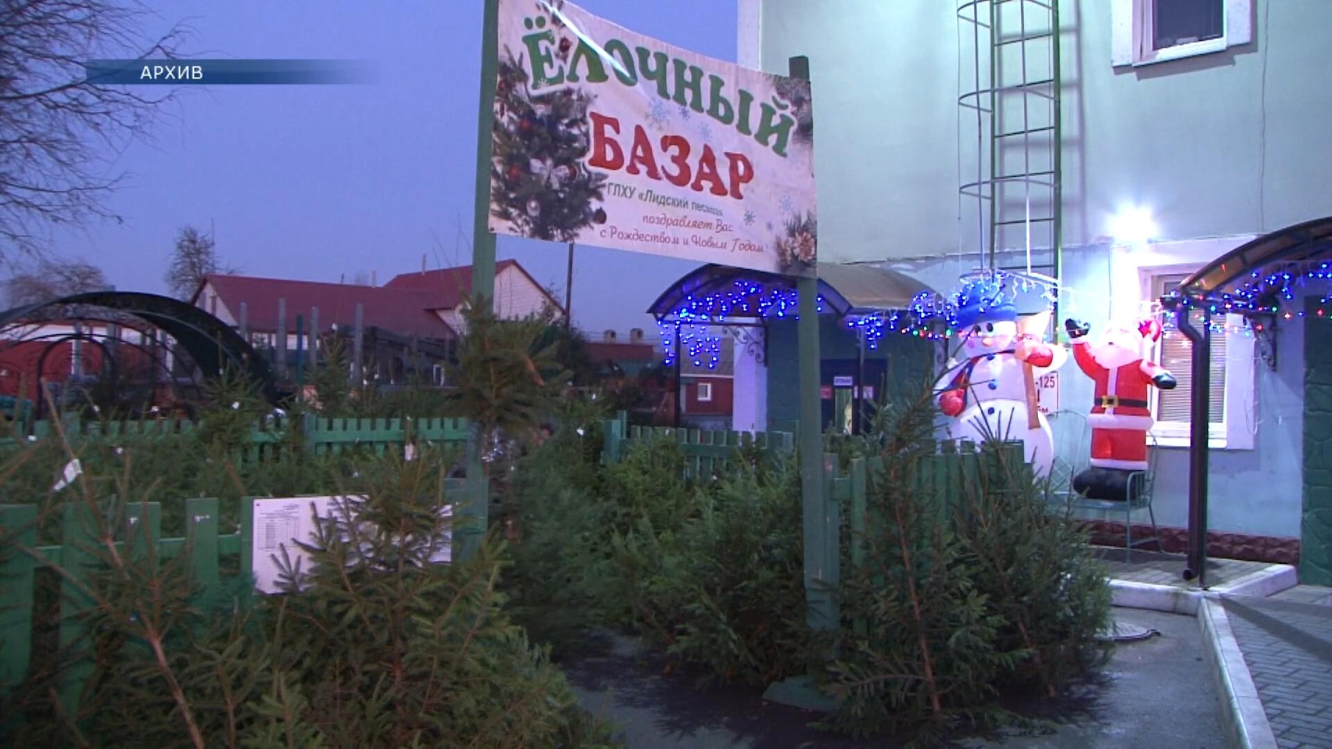 Как и каждый год, накануне Рождества и Нового года в Лиде будут работать елочные базары.