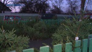 Накануне Рождества и Нового года в Лиде будут работать елочные базары