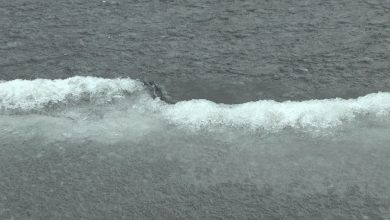 Толщина ледяного покрова на Лидском озере сейчас всего 10 миллиметров