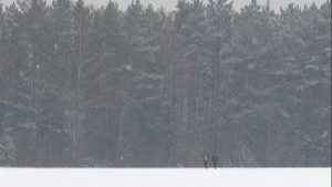 В Лиде пенсионер заблудился и провел почти 18 часов в лесу