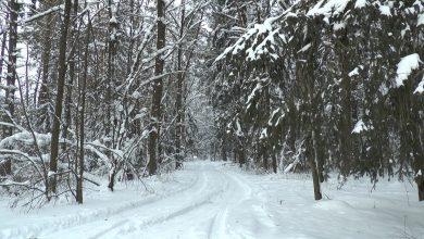 Синоптики прогнозируют в Беларуси на этой неделе до 28 градусов мороза
