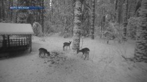 В лесоохотничьем хозяйстве Лидского лесхоза организована зимняя подкормка диких животных