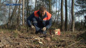 В Беларуси пройдет добровольная республиканская акция «Неделя леса»