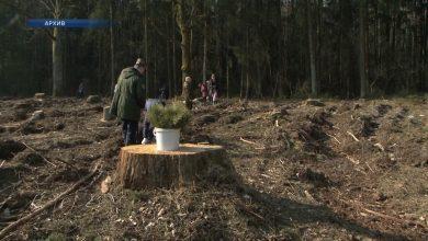 В субботу в Беларуси стартует добровольная республиканская акция «Неделя леса»