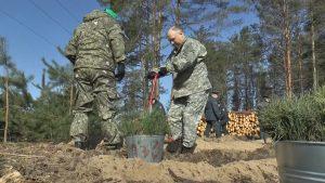 К добровольной акции «Неделя леса» на Лидчине присоединились почти 500 человек