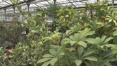 В Лиде построят ботанический сад