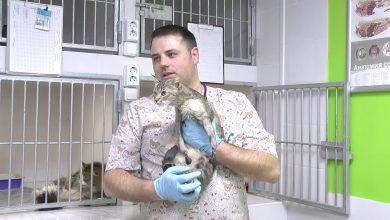 В Лиде делают уникальные операции по протезированию лап у животных
