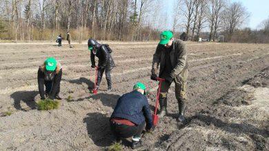 Работники Лидского райисполкома сегодня приняли участие в акции «Неделя леса».