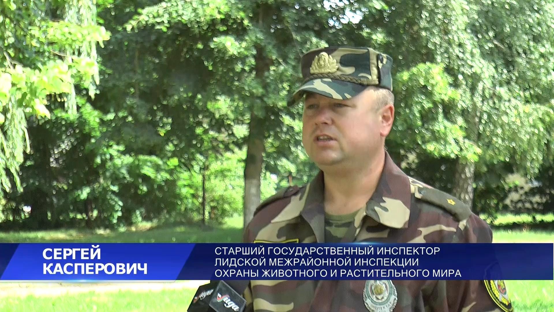 В Беларуси открывается летне-осенний сезон массовой охоты на пернатых