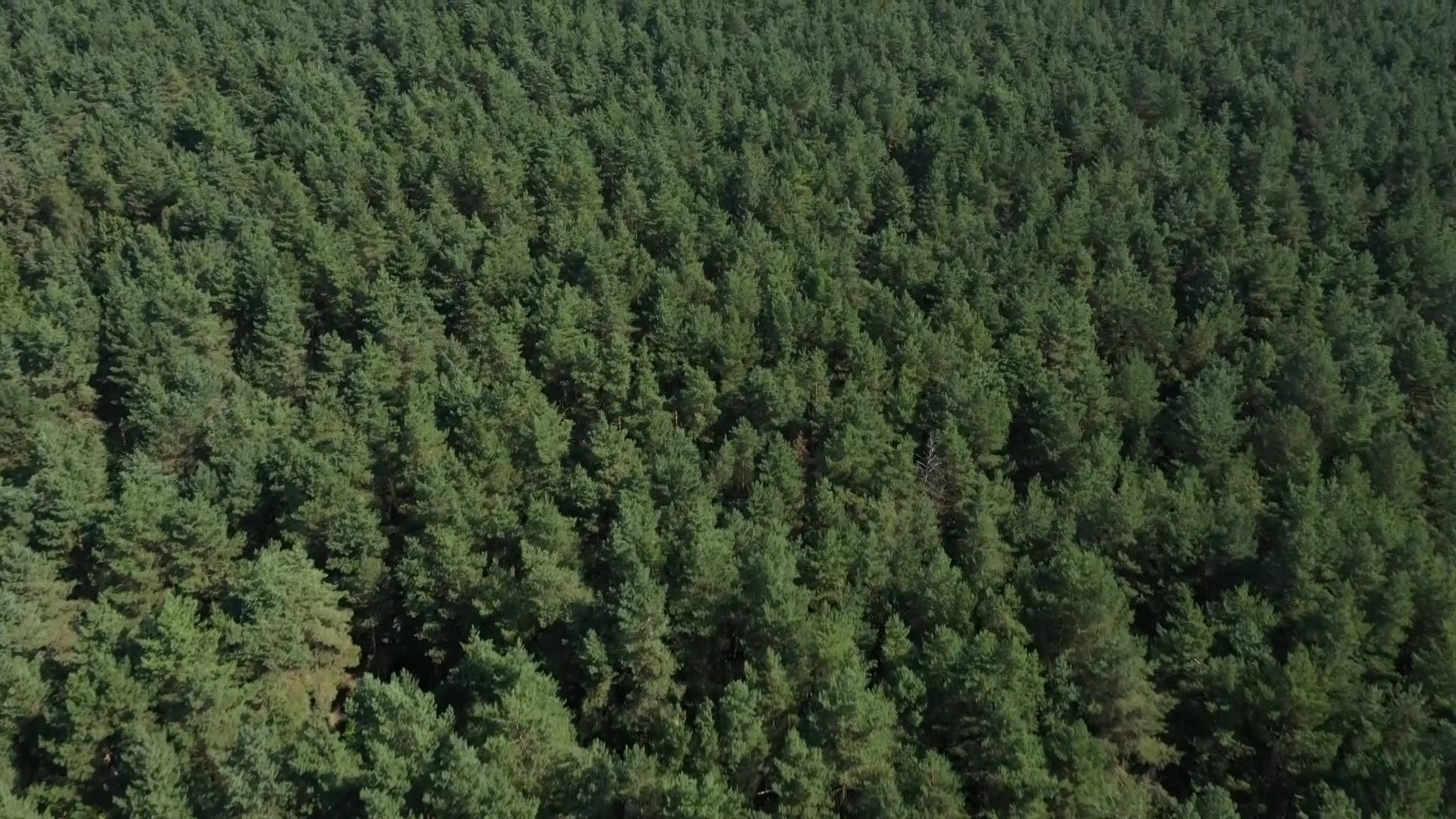 Посещение лесов в Лидском и Вороновском районах ограничено
