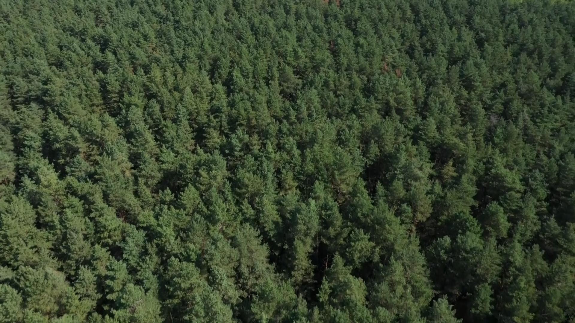 Ограничения на посещение лесов действуют практически по всей Гродненской области